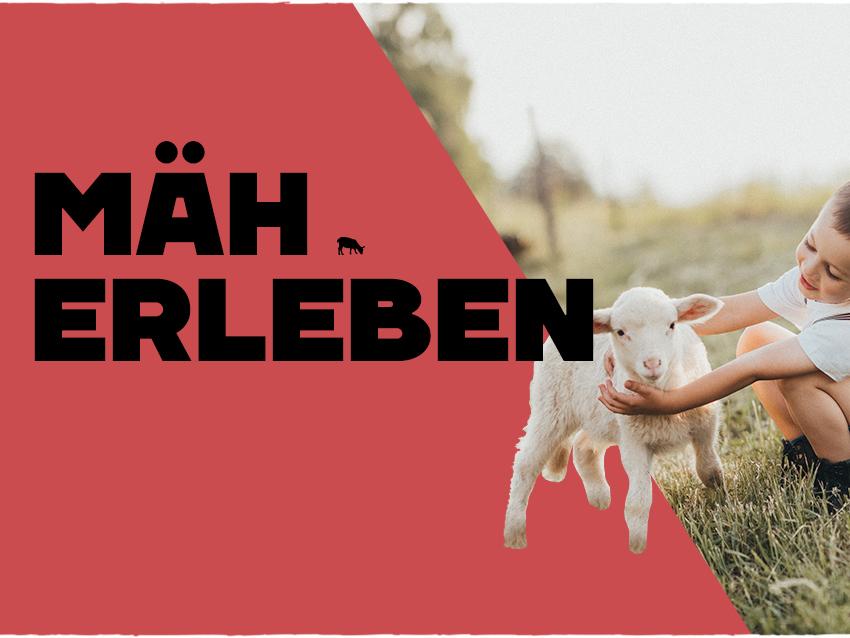 nordfrieslamm_mobile_erleben