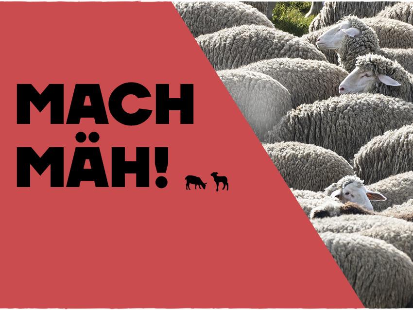 nordfrieslamm_mobile_machmäh